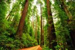 Redwood Road by Simple-Snapshots