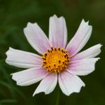 flower 154 by EphemeralMind