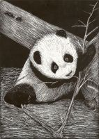 Panda Scratchboard by shirou45