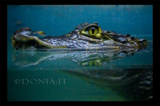 That Wild Look by donia