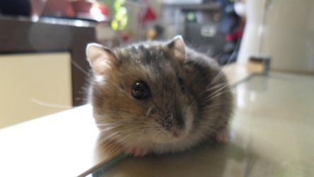 Milo the Hamster by cooldas