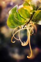 Tangles of Purity by eKBS