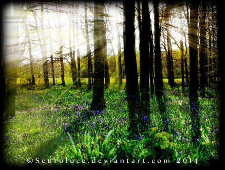Bluebell Rays by scuroluce