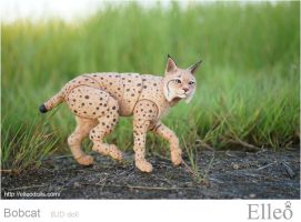 Bobcat Bjd Doll 06 by leo3dmodels