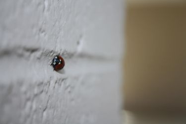 Lady Bug on a Wall by victizzle-mofo