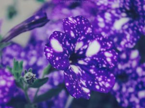 Galaxy Flowers II by Lumimyrskydawn