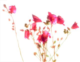 Fuschia Floral No. 2 by kparks