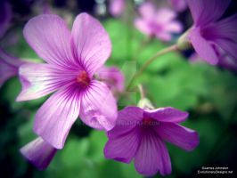 Pink Flowers - Lomography Effect by element321