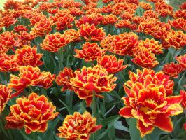 Multicolored Flowers 13663704 by StockProject1