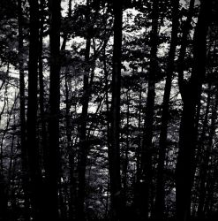 Shadow forest by surtea