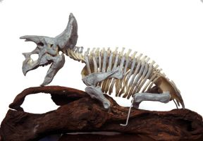 Triceratops LG2 by hannay1982