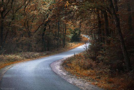 Road by MohannadKassab