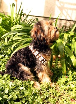 Teddy the Chewbacca Dog (Side Profile) by nenglehardt