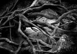 roots by abylick