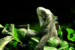 Reptilia by IsacGoulart