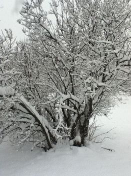 Snowy Tree by Bloodonmyhands25