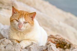 Rovinj Cat by KrisSimon
