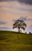 Lone Oak by StephGabler