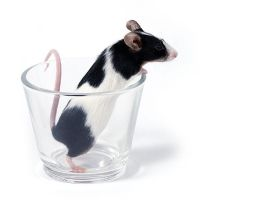glass of... mouse by Emielcia