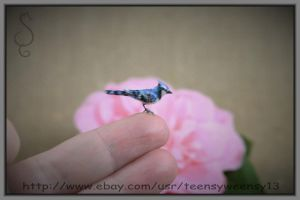 A Little Blue Jay ready for spring! by Teensyweensybaby