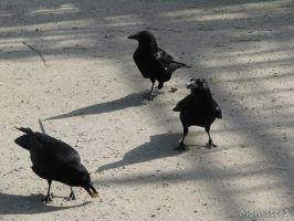 The crows party by Momotte2