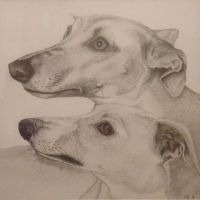 Two Lurchers, Pencil Drawing by GregBHargreaves