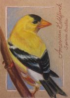 ACEO: American Goldfinch by DanielleMWilliams