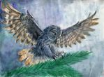 Owl by AlbinaDiamond