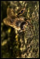 Brown Bee by Wivelrod