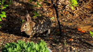 Silly Rabbit by robmurdock