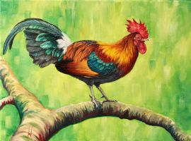 Red Jungle Fowl (Gallus gallus) by Hareguizer