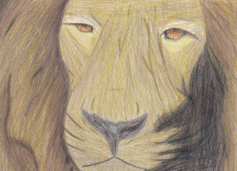 Pro-Drawing of Lion by Bendorah