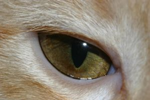 The Cats Eye by xtwizx-Stock