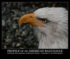 Profile of an American Eagle by Isquiesque