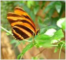 Butterfly World 1 by jewelslove