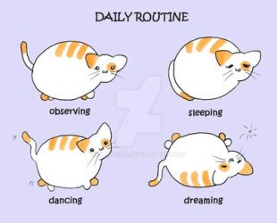 #10 Mama Momoko - Daily Routine by travelie