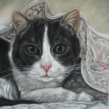 A cat called Holly by LouiseMarieFineArt