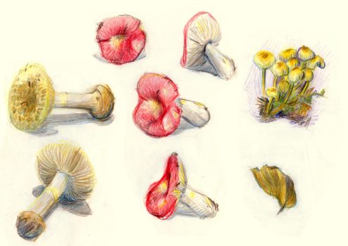 Mushrooms sketches by Littlelit