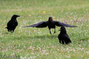 Hungry juvenile crow by Momotte2