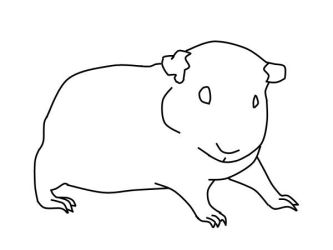 guinea pig line art 2 by Orouch