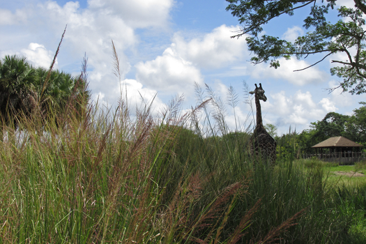 A Giraffe Through the Grasses IMG 1539 by TheStockWarehouse