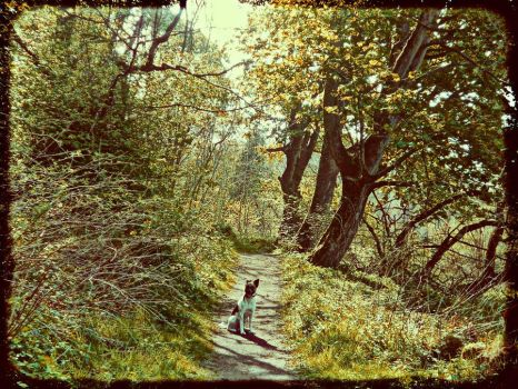 Vintage path by RachelG66