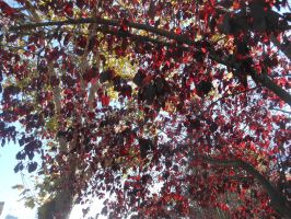 The Autumn Leaves by discoinferno84