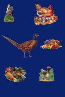 Vict pack 24-birds_quaddles by quaddles