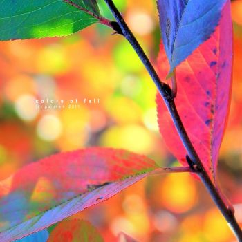 Colors of fall by Pajunen