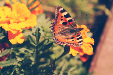 Butterfly by Pejntingowa