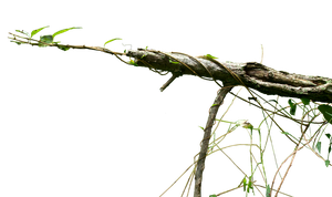 Creepy Vine PNG by FOTOSHOPIC