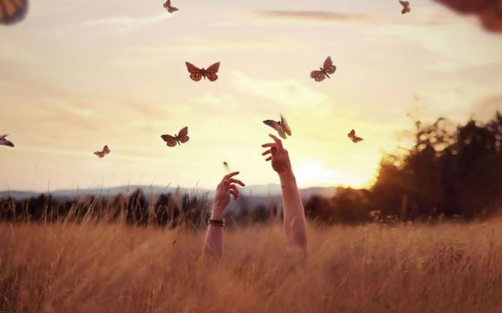 Wallpaper butterfly by Analaurasam
