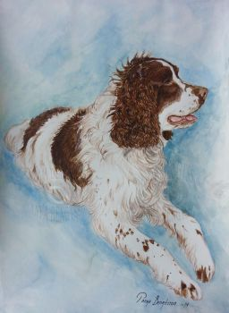 Portrait of a Springer Spaniel by RaggedVixen