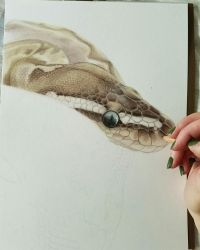 Ball Python Work in Progress by Gray-Ghost-Creations